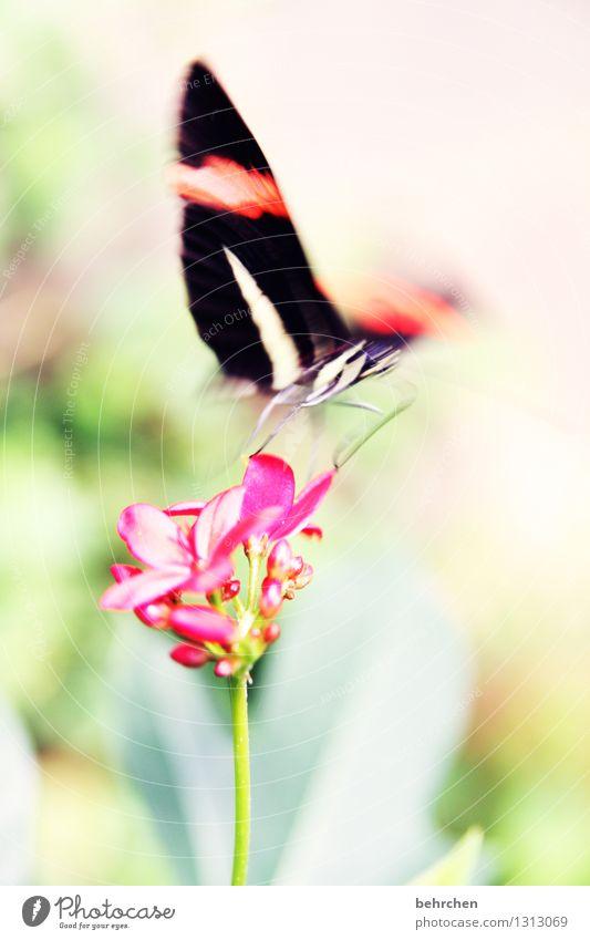 was vom tage übrig blieb... Natur Pflanze schön Sommer Blume Blatt Tier Blüte Frühling Wiese Bewegung Garten außergewöhnlich fliegen gehen Park