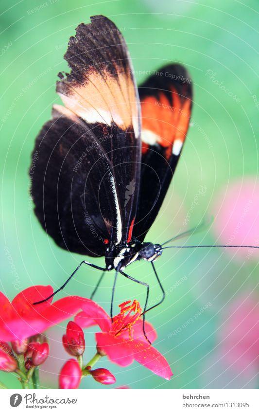 lecker schmecker blütenstaub Natur Pflanze grün schön Sommer Blume Blatt Tier Blüte Frühling Wiese Garten außergewöhnlich fliegen rosa Park