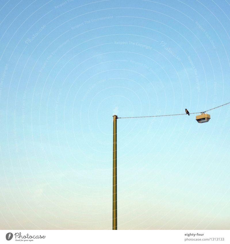 Warteschleife Wolkenloser Himmel Sommer Schönes Wetter Stadt Vogel 1 Tier beobachten schaukeln Einsamkeit Höhenangst Langeweile Leichtigkeit Schwerpunkt