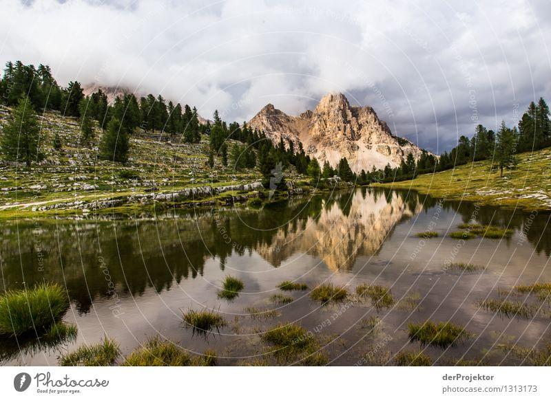 Abendstimmung am See Natur Ferien & Urlaub & Reisen Pflanze Sommer Baum Landschaft Tier Ferne Berge u. Gebirge Umwelt Gefühle Wiese Freiheit Felsen