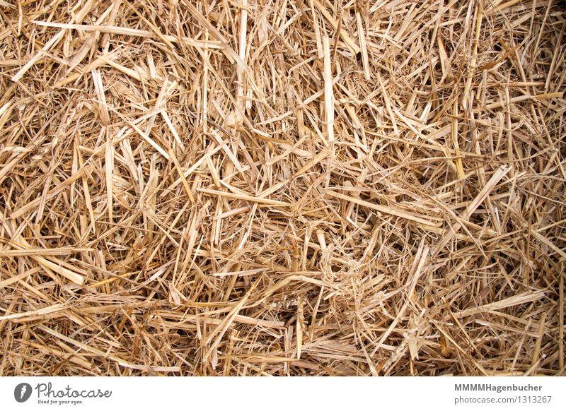 Stroh Getreide Landwirtschaft Forstwirtschaft Natur Feld trocken gelb Hintergrundbild Struktur Haufen Stapel Ackerbau Einstreu golden August ausgedroschen