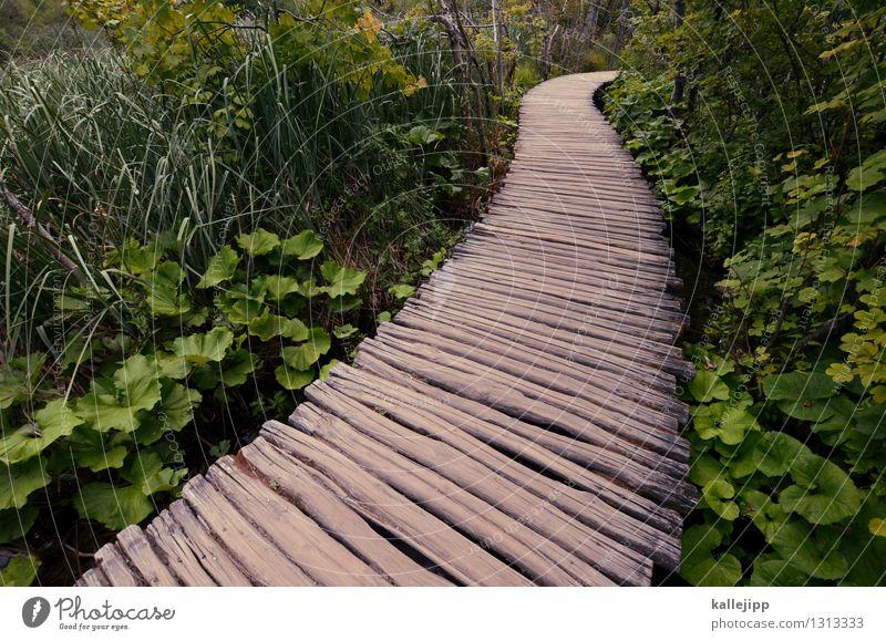auf dem holzweg Natur Ferien & Urlaub & Reisen Pflanze grün Landschaft Tier Ferne Wald Umwelt Wege & Pfade Holz Tourismus Ausflug Zukunft Abenteuer planen
