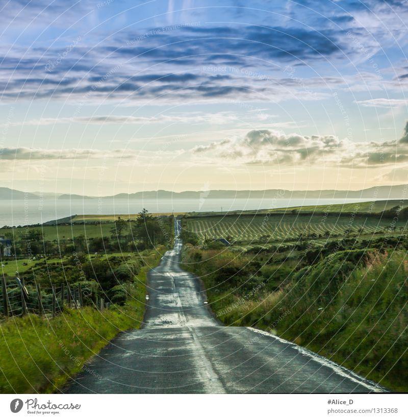 Es ist ein langer Weg Umwelt Natur Landschaft Himmel Wolken Klima Wetter Regen Gras Sträucher Wildpflanze Wiese Feld Hügel Küste Schottland Highlands Europa