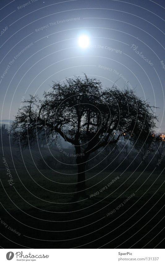 Baum im Mondschein Baum kalt Wiese Angst leer Mond fremd