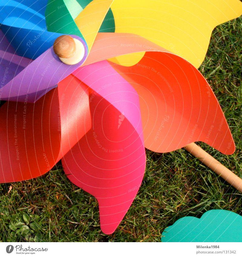 windstill grün blau rot gelb Farbe Wiese Gras Garten Park Stimmung orange Wind Fröhlichkeit Rasen Freizeit & Hobby