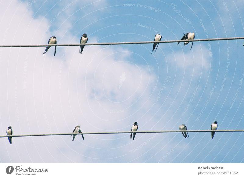 Elsterntreffen Himmel Wolken Vogel Pause Kommunizieren Aussicht Verabredung Elektrizität Hochspannungsleitung Elster