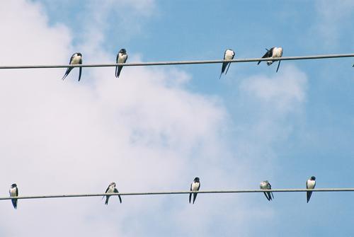 Elsterntreffen Vogel Hochspannungsleitung Wolken Pause Kommunizieren Verabredung Himmel Aussicht