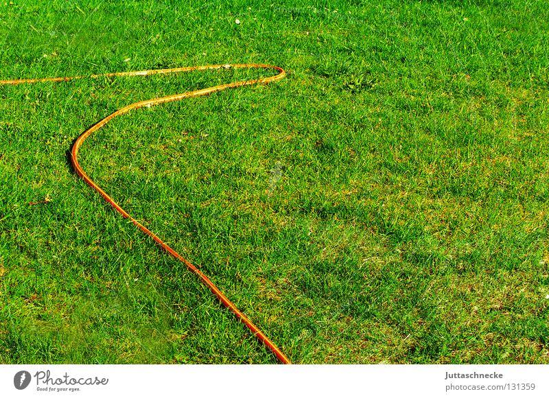 Boa Plastikor Wasser grün Sommer Arbeit & Erwerbstätigkeit Wiese Gras Garten nass Wachstum Rasen Freizeit & Hobby trocken gießen Schlauch Haushalt Gartenarbeit