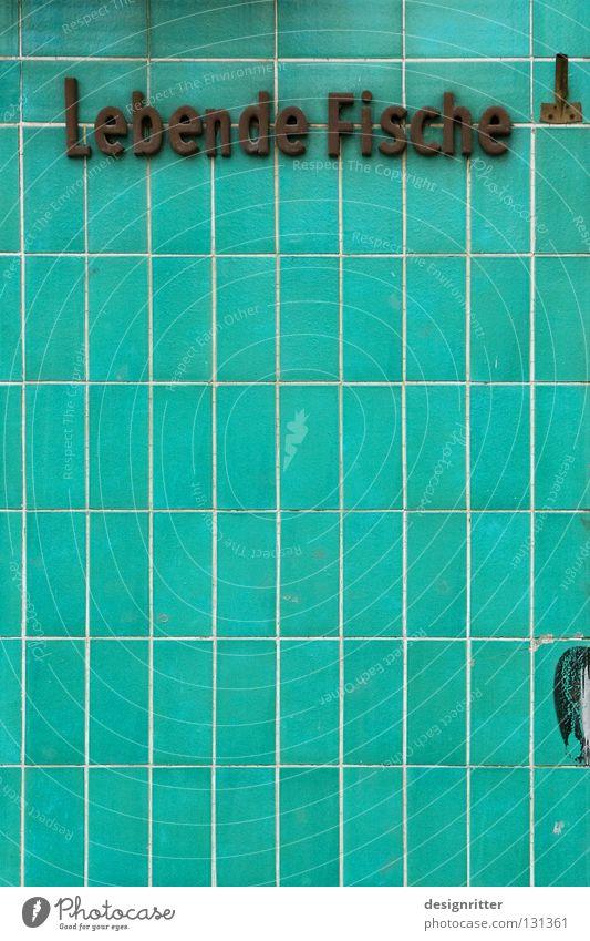 … oder lebendig Aal Tintenfisch Hering Leben Tod Fischgeschäft Ladengeschäft Handel Händler Information Beschriftung Typographie Aquarium gefangen Angeln