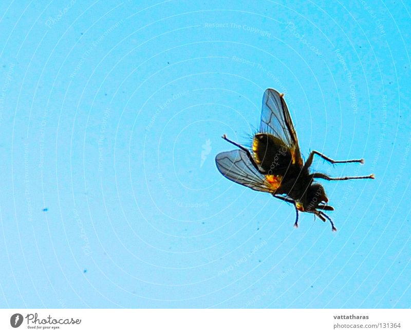 a fly on my window... Himmel Makroaufnahme Nahaufnahme Friday Morning Fly Window Blue sky Detailaufnahme