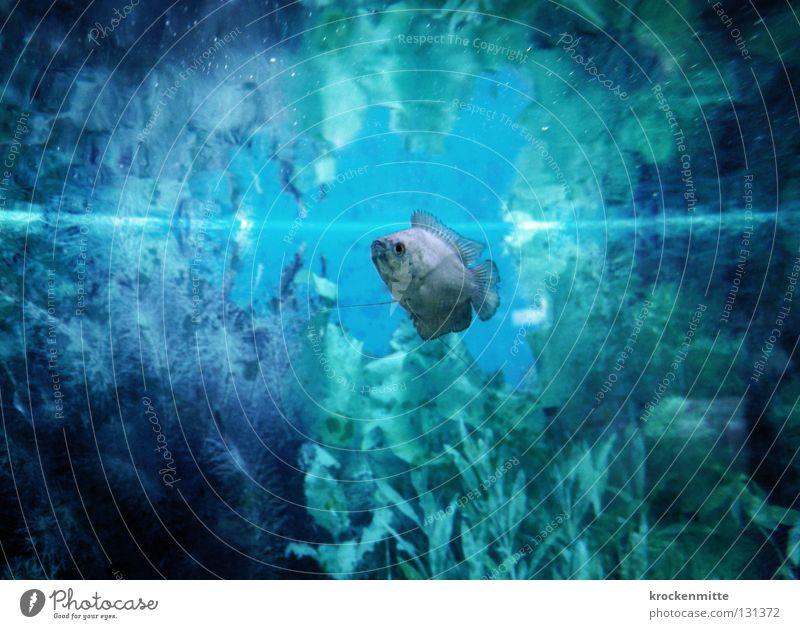 Me, The Fish & The Sea Aquarium Unterwasseraufnahme tauchen Wasseroberfläche Fisch blau Pflanze Einsamkeit Schwimmhilfe Schwimmen & Baden