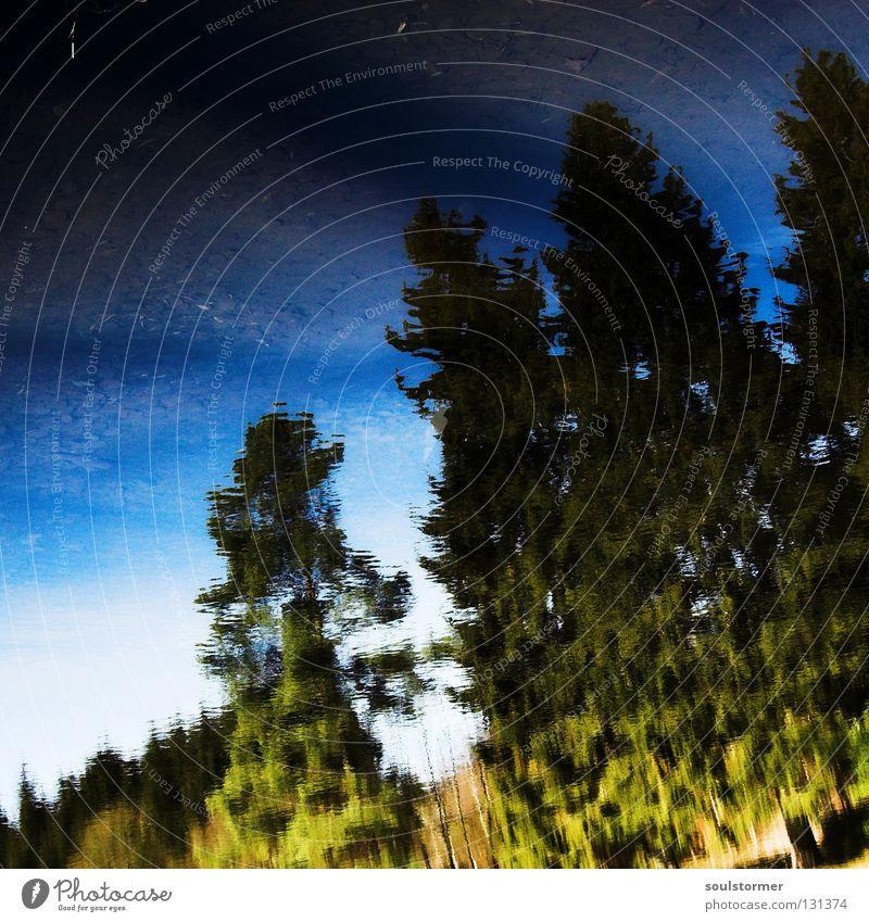 deep blue Baum Spiegel See Frühling Winter kalt nass Ekel Reflexion & Spiegelung braun Quadrat Himmel Wasser Eis Ast ihh mirror tree blau sky