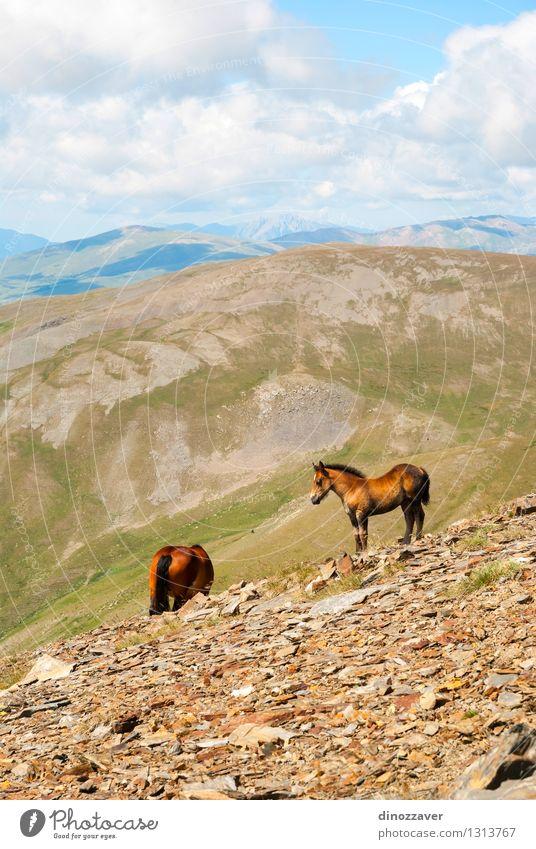 Reiter in den Bergen schön Ferien & Urlaub & Reisen Tourismus Sommer Berge u. Gebirge wandern Umwelt Natur Landschaft Tier Himmel Wolken Gras Park Wald Hügel