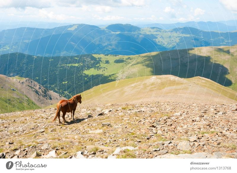 Pferd in Bergen Himmel Natur Ferien & Urlaub & Reisen blau grün schön Sommer Landschaft Wolken Tier Wald Berge u. Gebirge Umwelt Gras natürlich Stein