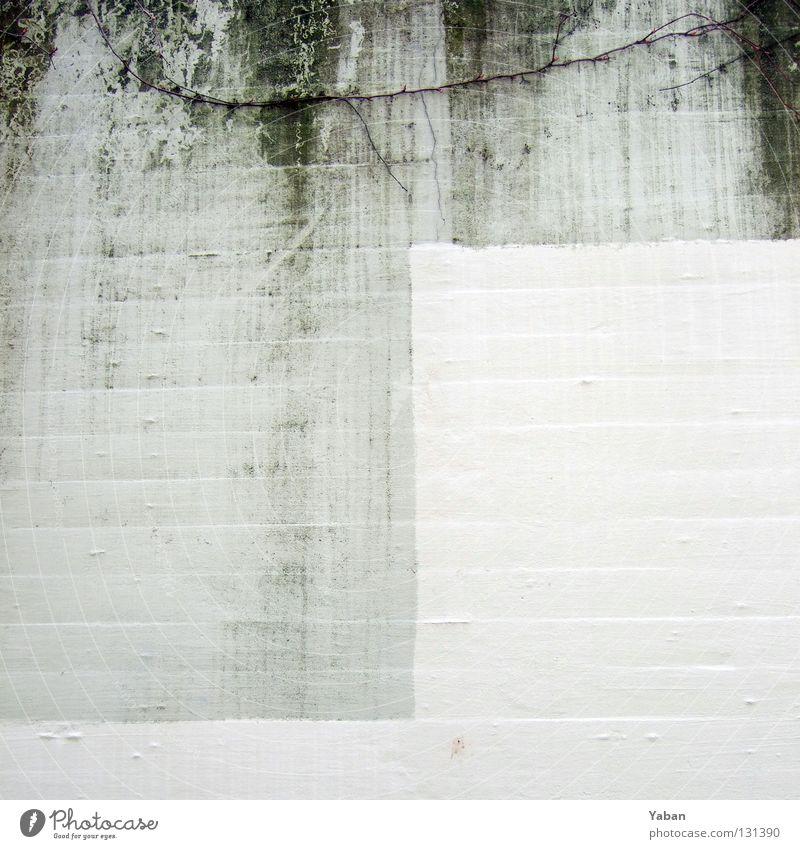 Deckweiß Natur weiß Wand Garten grau Park Beton verfaulen Spuren Vergänglichkeit feucht Fleck binden Schliere faulig Betonwand