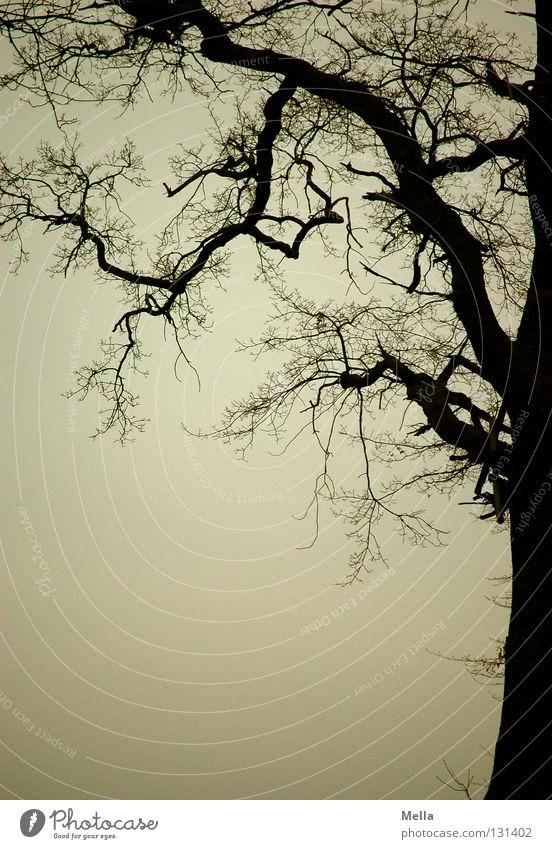 Mein Freund, der Baum Geäst verzweigt Silhouette trüb grau trist unheimlich mystisch dunkel gruselig Rahmen fein dünn dick Eiche Waldrand Himmel Ast Zweig