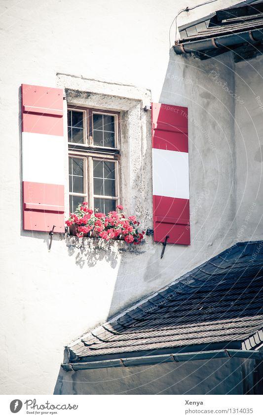 Fenster mit Fensterläden in rot weiß Haus Mauer Wand Fensterladen Urlaubsfoto Blumenkasten Dach Außenaufnahme Menschenleer Licht Schatten Farbfoto Gebäude