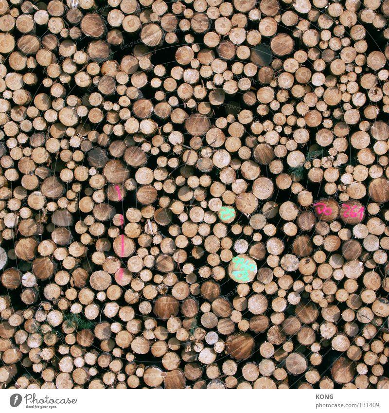 woodstock Baum Holz Kreis Ende Baumstamm Material Stapel Lager Forstwirtschaft Schichtarbeit Säge Abholzung Holzfäller