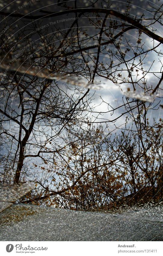 Pfützen fetzen Wasser Baum Wald kalt Regen Wetter nass Ast Spiegel Bürgersteig Gewitter Unwetter Bodenplatten Hochwasser Überschwemmung