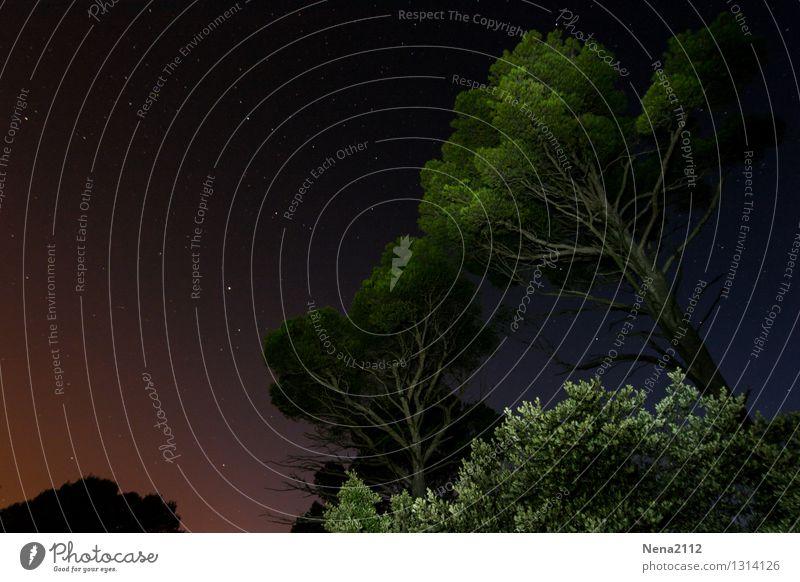 Nachtruhe Umwelt Natur Landschaft Pflanze Himmel Wolkenloser Himmel Nachthimmel Stern Sommer Schönes Wetter Baum Park Wald Berge u. Gebirge dunkel fantastisch