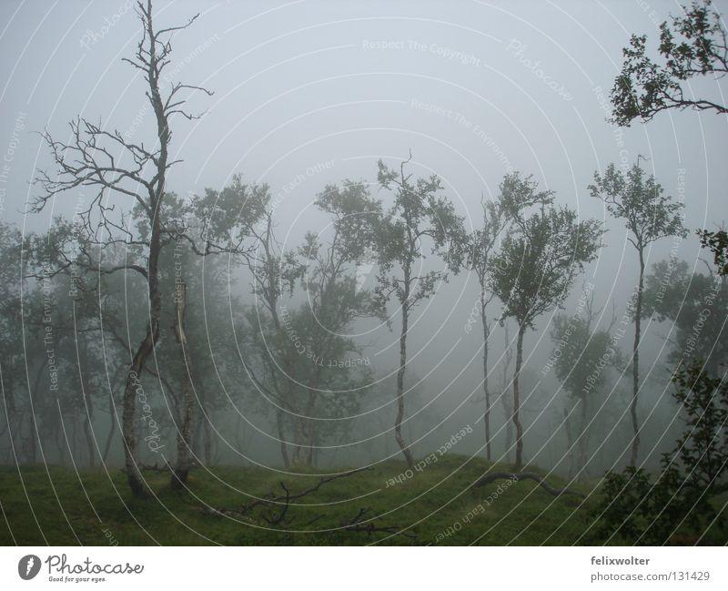 what a beautiful day Nebel Norwegen wandern Birke Baum unheimlich mystisch Herbst Trauer Verzweiflung Regen Landschaft