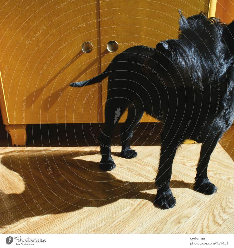 Auf den Hund gekommen Tier schwarz gelb Gefühle klein glänzend Häusliches Leben niedlich süß Neugier Fell Wachsamkeit Haustier Kontrolle Säugetier