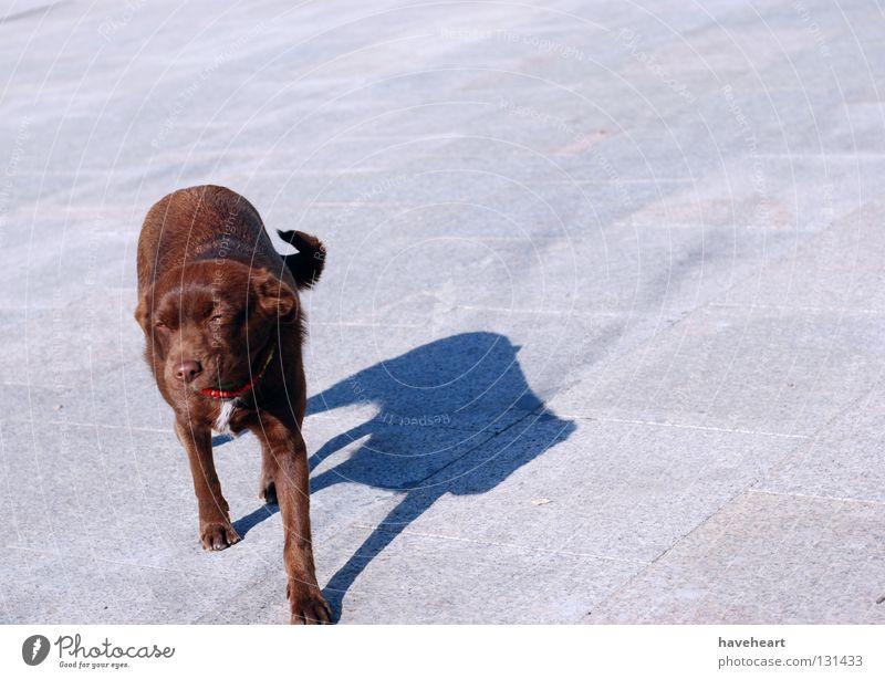 Lazy Afternoon / Fauler Nachmittag / Leniwe Popoludnie rot Tier Hund Quadrat Säugetier Pfote