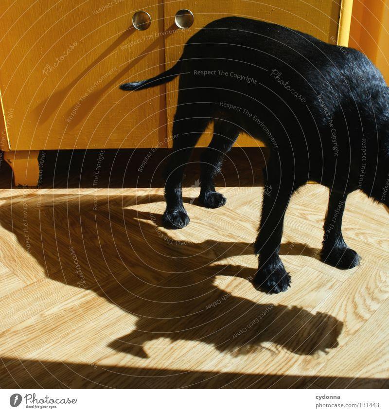Kopflos Hund Tier schwarz gelb Gefühle klein glänzend Häusliches Leben niedlich süß Neugier Fell Wachsamkeit Haustier Kontrolle Säugetier