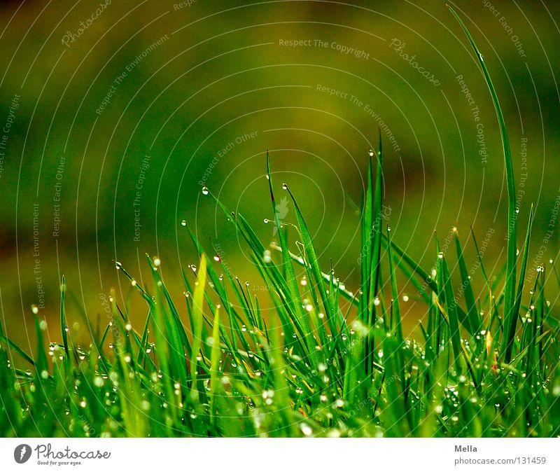 Spitzentanz Natur grün Wasser Erholung ruhig Wiese Gras oben Regen Park frisch Erde Perspektive Wassertropfen nass