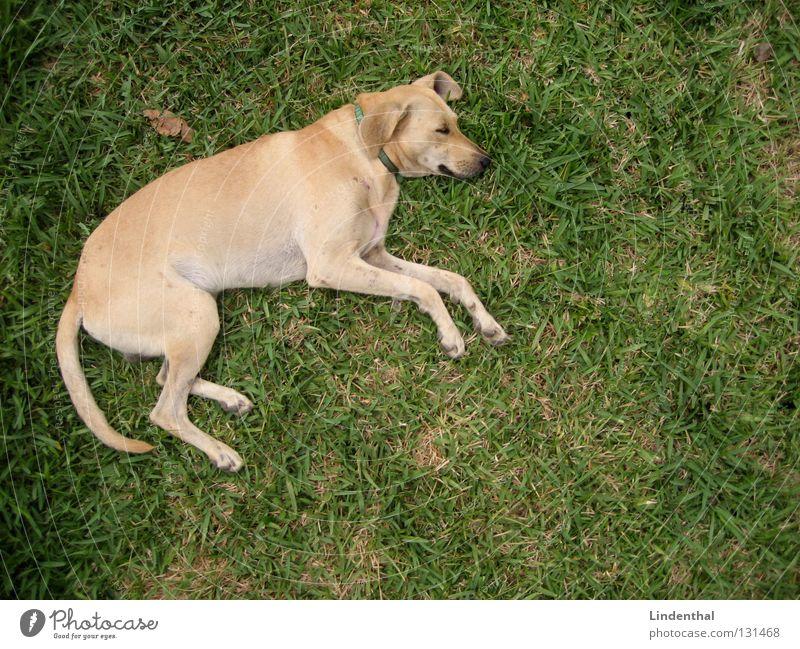 Schnuffel beim Chillen Hund Fell Gitter Zaun Maschendraht Beton Betonboden Vogelperspektive schlafen Logo Puma Dimension Erholung springen Säugetier schnuffel