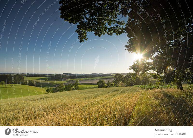 Sommerlandschaft Himmel Natur Pflanze blau grün schön Sonne Baum Landschaft Blatt Umwelt Wärme Gras hell Horizont