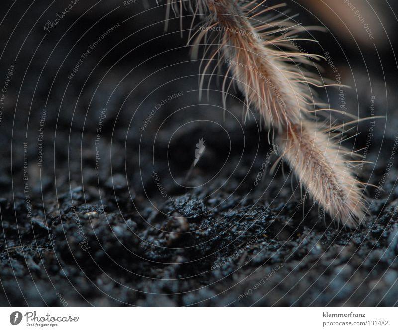 Ein Bein Beine Erde Anschnitt Bildausschnitt Spinne Terrarium Spinnenbeine Vogelspinne