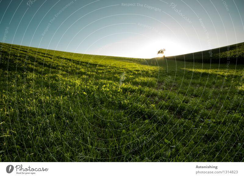 Wiese Umwelt Natur Landschaft Pflanze Himmel Wolkenloser Himmel Horizont Sonne Sonnenaufgang Sonnenuntergang Sonnenlicht Sommer Wetter Schönes Wetter Wärme Baum