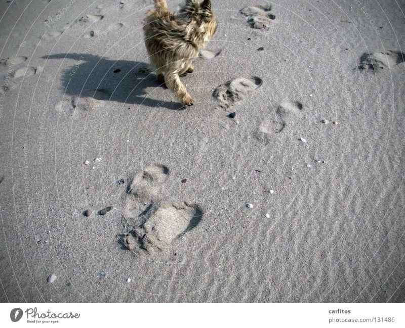 Strandknut Hund toben Gesetze und Verordnungen Tierliebe freilaufend Ferien & Urlaub & Reisen Meer Sylt Gelenk Erholung Energie Luft Wellen träumen Säugetier