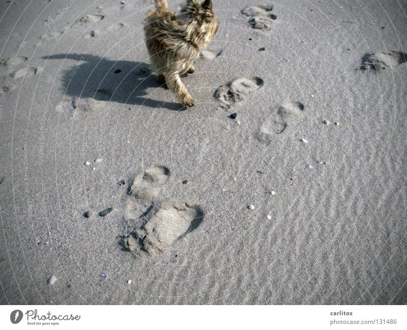 Strandknut Meer Freude Ferien & Urlaub & Reisen Schnee Erholung träumen Hund Sand Luft Wellen Küste laufen Energie frei rennen