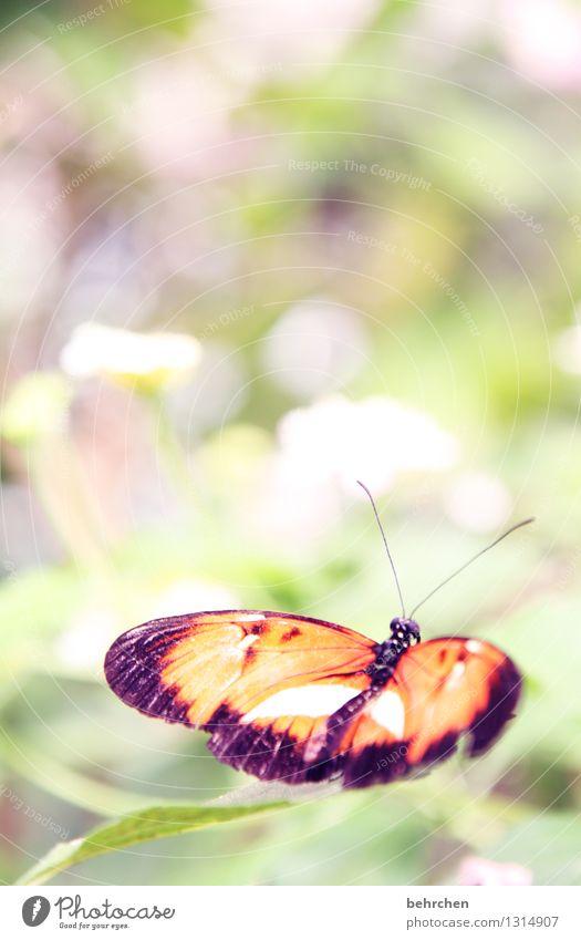 leichtigkeit Natur Pflanze grün schön Sommer Baum Erholung Blume Blatt Tier Blüte Frühling Wiese Garten außergewöhnlich fliegen