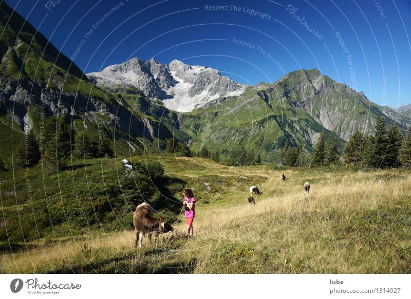 Anna schaut zum Vieh Landwirtschaft Forstwirtschaft Mädchen 8-13 Jahre Kind Kindheit Umwelt Natur Landschaft Wolkenloser Himmel Sommer Klima Schönes Wetter