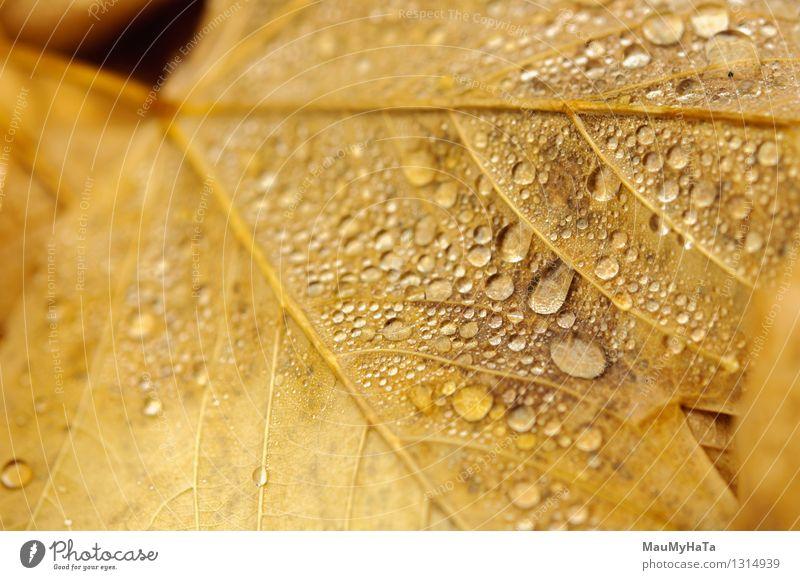 Wassertropfen Natur Pflanze Herbst Klimawandel schlechtes Wetter Nebel Regen Baum Garten Park Wald Euphorie Ehre selbstbewußt Coolness Tatkraft Farbfoto