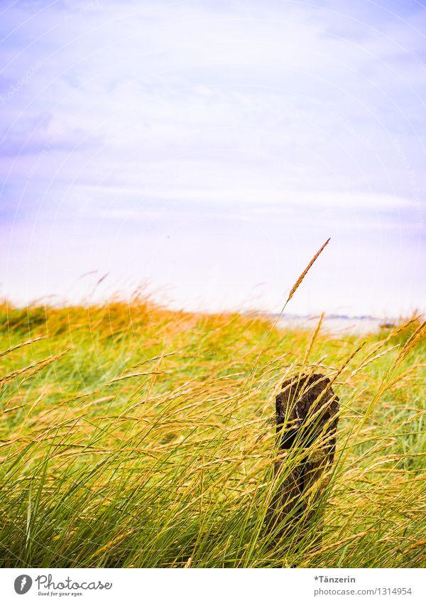 Strandidyll Himmel Natur Ferien & Urlaub & Reisen blau Pflanze Sommer Erholung Meer Landschaft ruhig Ferne Leben Gras Küste Freiheit