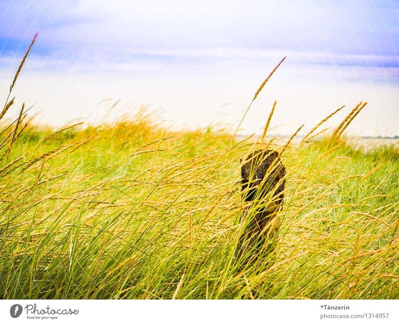 Strandidyll II Himmel Natur Ferien & Urlaub & Reisen Pflanze schön Sommer Wasser Sonne Meer Landschaft Ferne Gras Gesundheit Freiheit Freizeit & Hobby
