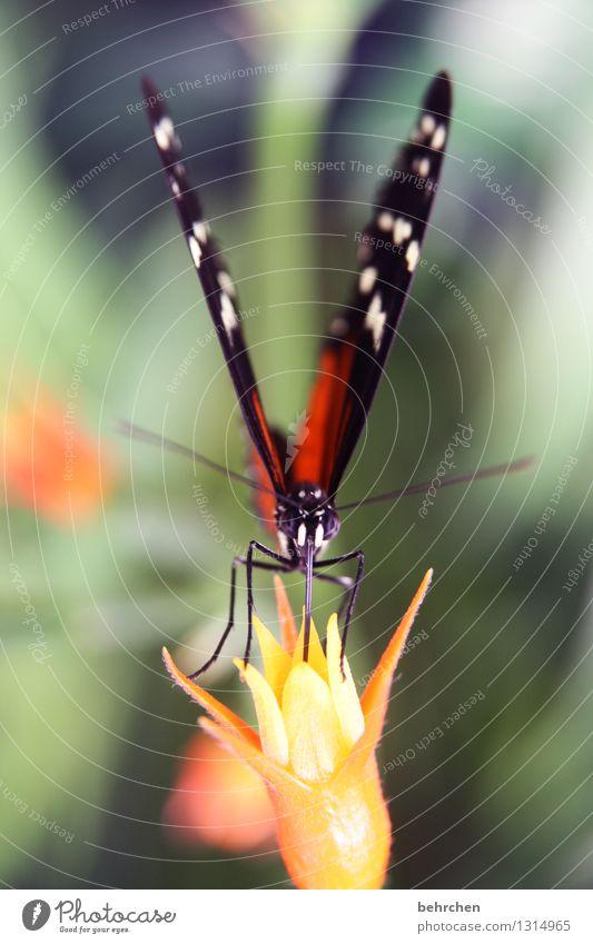 verbissen...saugen Natur Pflanze Tier Frühling Sommer Schönes Wetter Blume Blatt Blüte Garten Park Wiese Wildtier Schmetterling Tiergesicht Flügel 1 beobachten