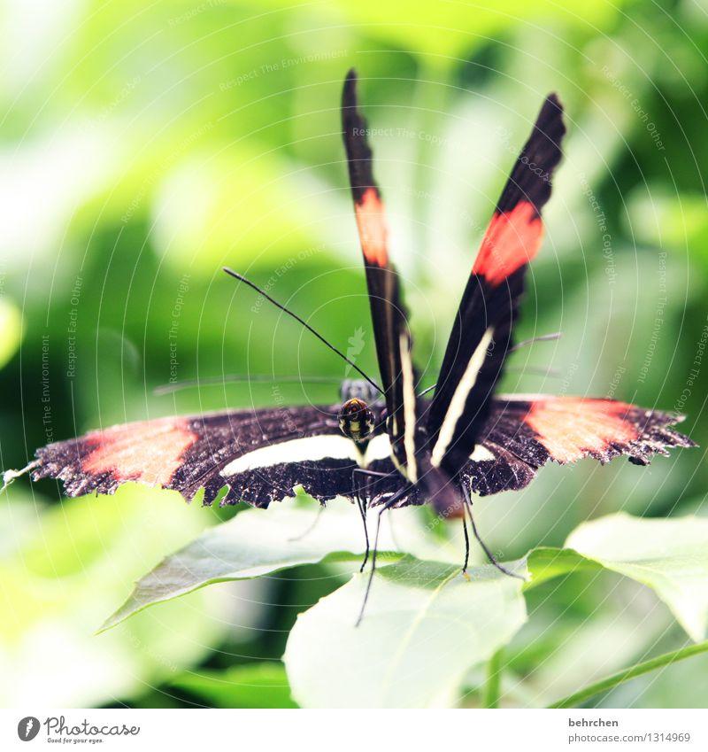 move it, baby! Natur Pflanze grün schön Sommer Baum rot Blatt Tier schwarz Liebe Frühling Wiese Garten außergewöhnlich fliegen