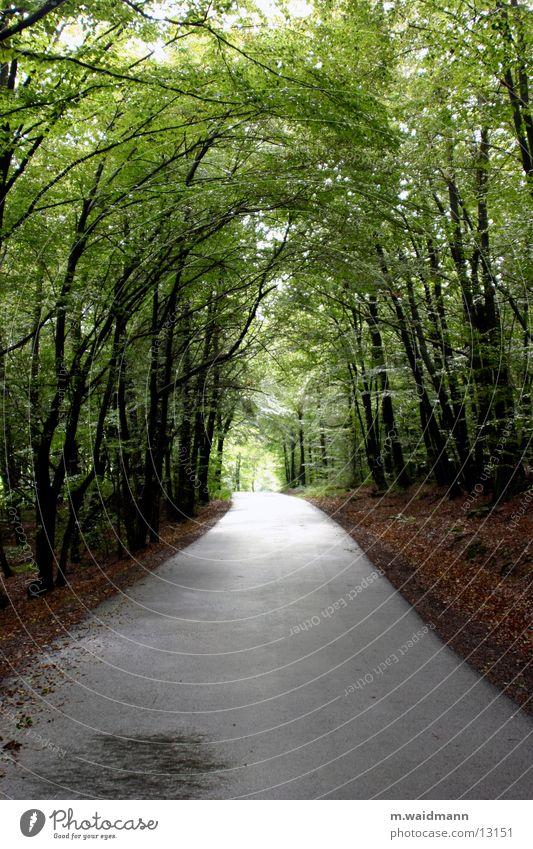 waldweg Baum Sonne Blatt Straße Wald Wege & Pfade