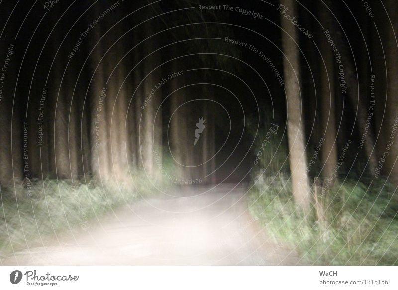 Geisterwald Natur Landschaft Wald fahren bedrohlich dunkel gruselig Traurigkeit Sorge Trauer Tod Müdigkeit Heimweh Einsamkeit Angst Entsetzen Todesangst
