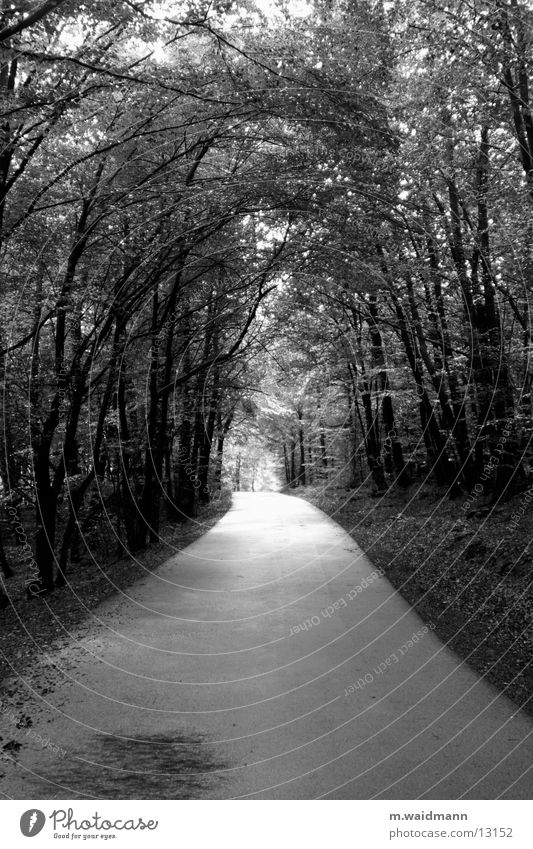 waldweg sw Baum Sonne Blatt Straße Wald Wege & Pfade