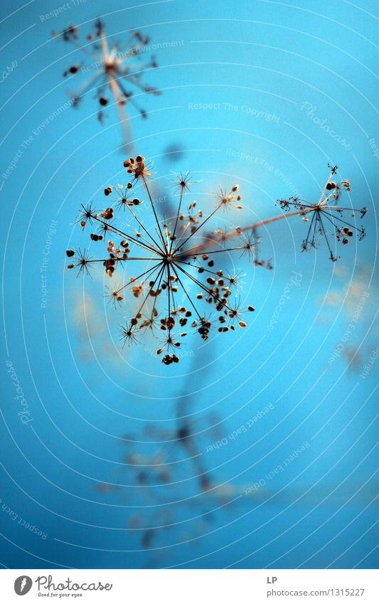 blau 6 Umwelt Natur Landschaft Pflanze Urelemente Luft Himmel Frühling Sommer Herbst Klima Schönes Wetter Blume Blüte Wildpflanze exotisch Garten Park Wiese