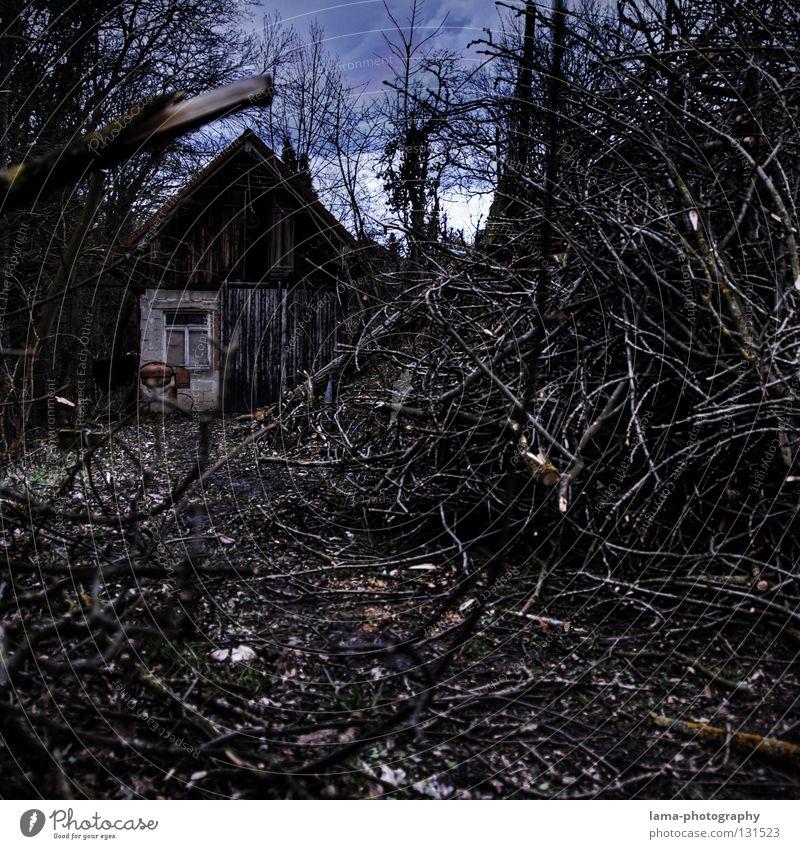 Woodcutter's Home Baum Blatt Haus Wald dunkel Holz Wege & Pfade Beton Ast Spuren Sturm verfallen Hütte Fußweg Märchen Zerstörung