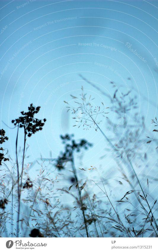 Himmel Natur Pflanze blau schön Sommer Landschaft Umwelt Wärme Herbst Gefühle Frühling Wiese Gras feminin Garten