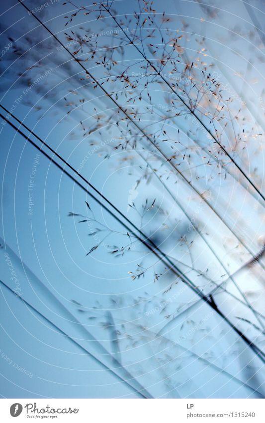 blau 5 Umwelt Natur Landschaft Pflanze Urelemente Luft Himmel Wolkenloser Himmel Horizont Frühling Sommer Herbst Klima Schönes Wetter Blume Gras Nutzpflanze