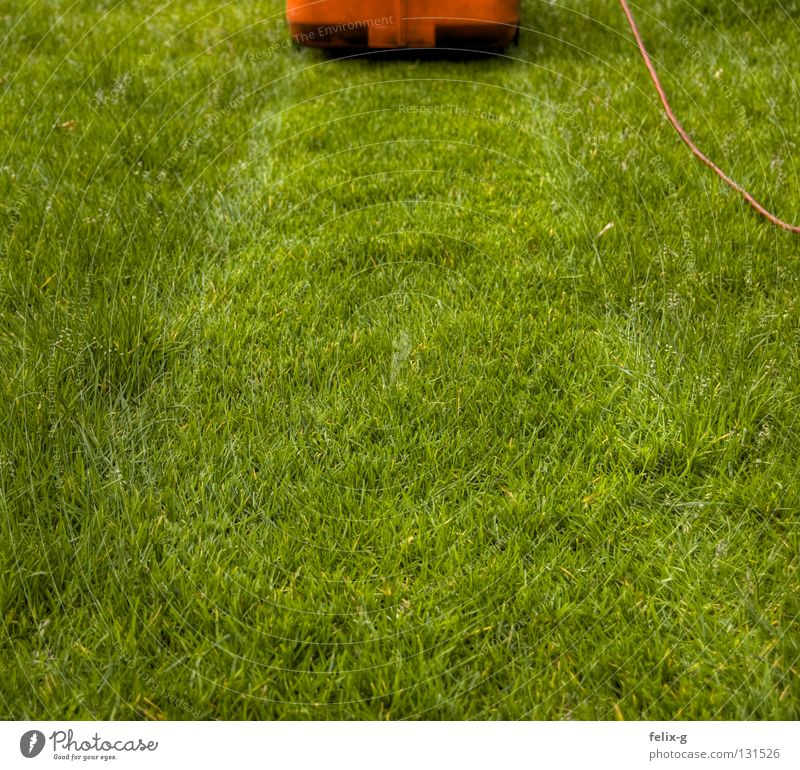 rasierer Blume grün Pflanze rot Wiese Garten Park Elektrizität Kabel Sportrasen Stoppel Sportplatz Rasenmäher rasenmähen